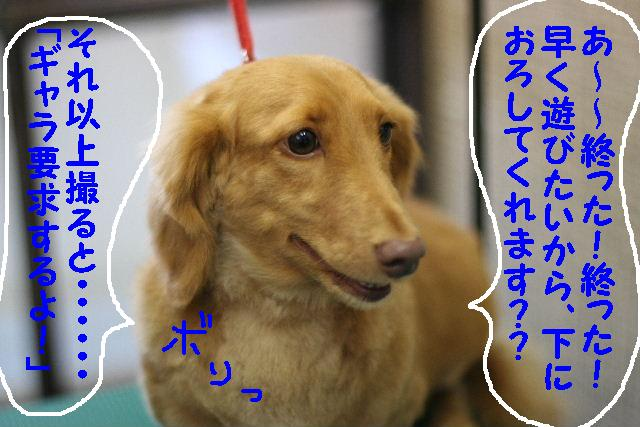 b0130018_143872.jpg
