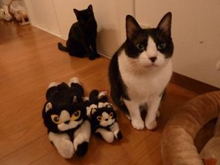 ふたりっきりになりたい猫 空ろった編。_a0143140_2054363.jpg