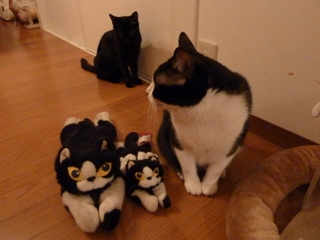 ふたりっきりになりたい猫 空ろった編。_a0143140_20561474.jpg
