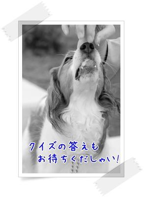 d0013149_0495511.jpg