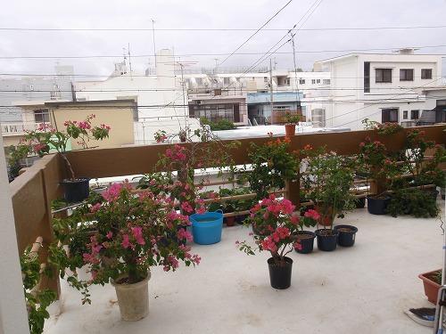 秋の花々_c0180460_23515958.jpg