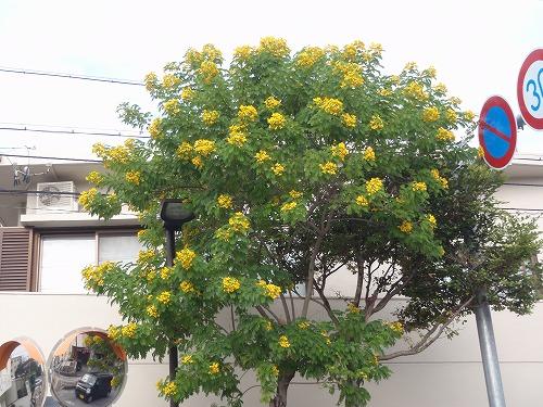 秋の花々_c0180460_23525151.jpg