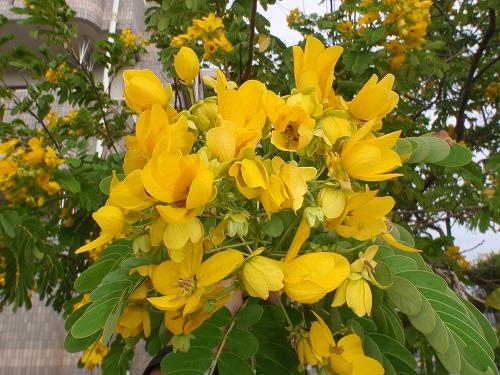 秋の花々_c0180460_23531389.jpg