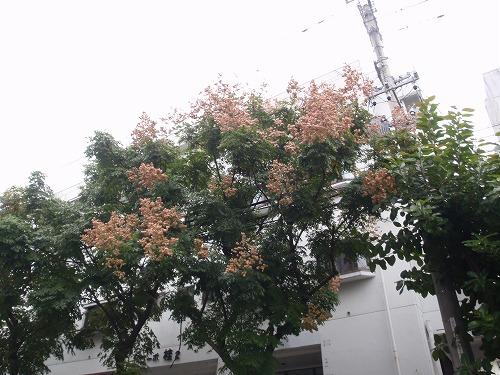 秋の花々_c0180460_23535848.jpg