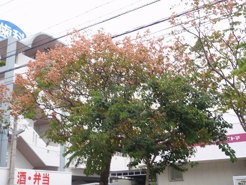 秋の花々_c0180460_23541633.jpg