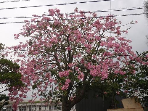 秋の花々_c0180460_23543591.jpg