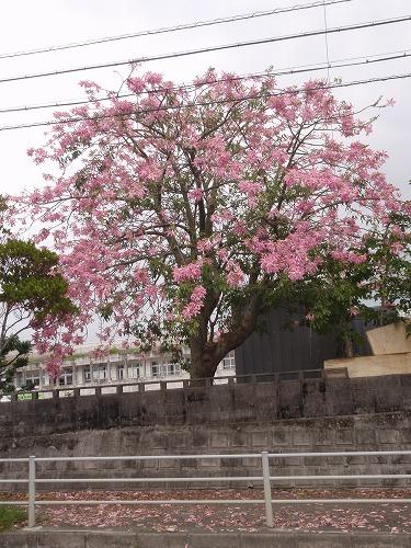 秋の花々_c0180460_23545550.jpg