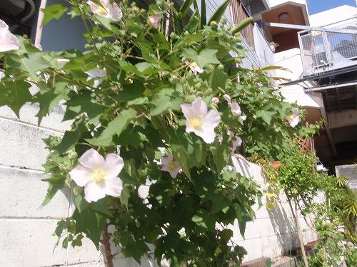 秋の花々_c0180460_235993.jpg