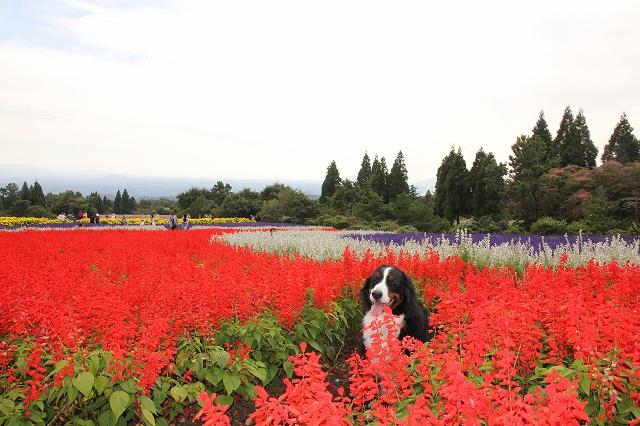 花公園へ♪_b0135889_22575681.jpg
