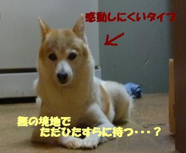 a0154801_19431599.jpg