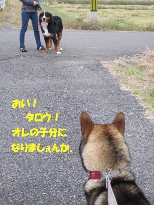 f0143123_2013887.jpg