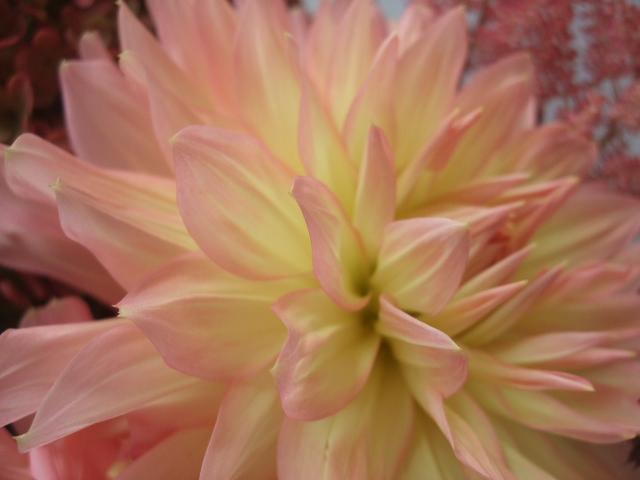 オークリーフ(ミナズキ紫陽花とダリアの花束)_f0049672_16195836.jpg