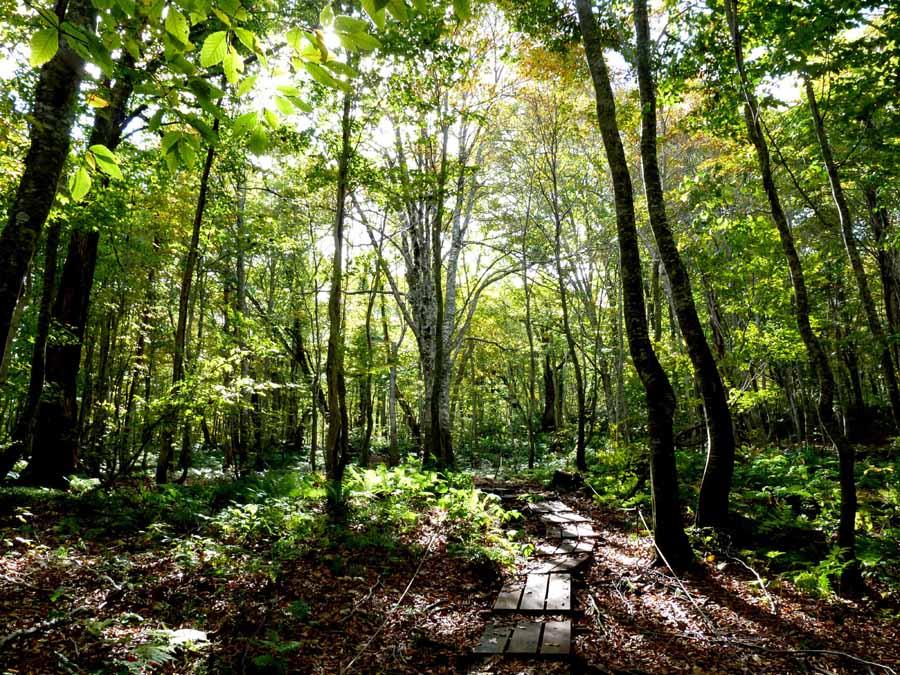 岳岱ぶな林の風景_f0150893_18534133.jpg