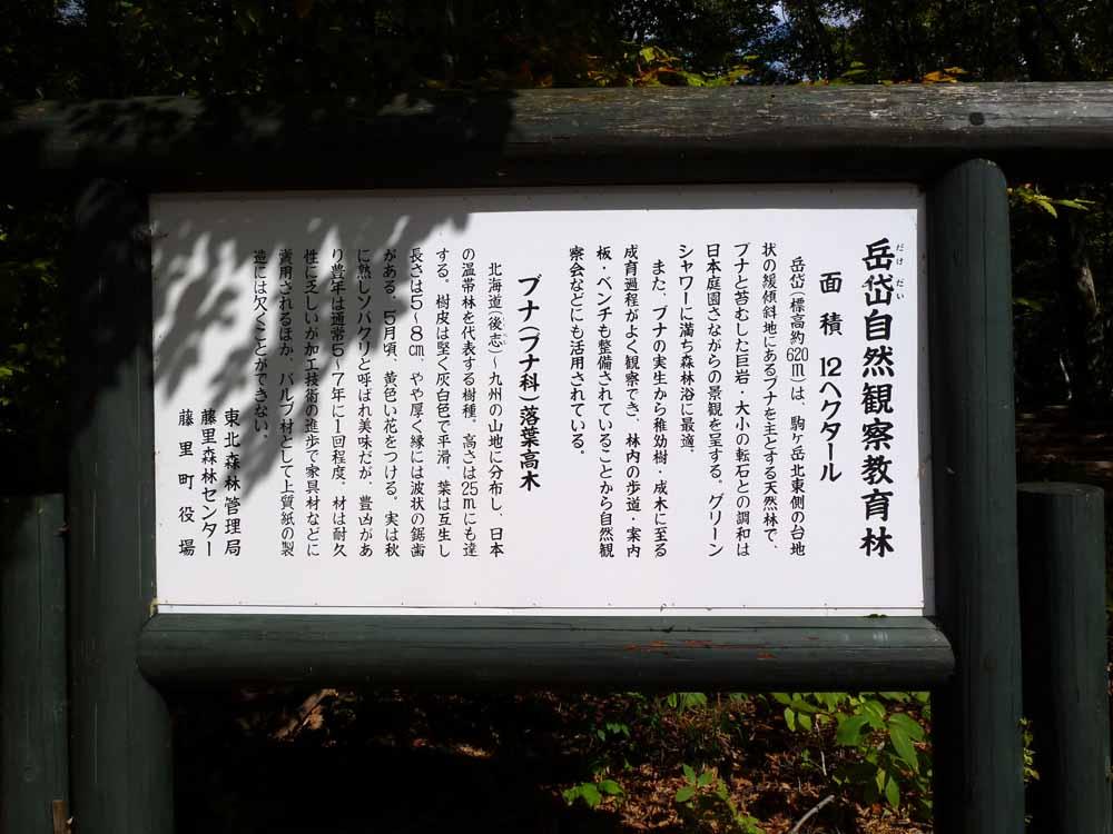 岳岱ぶな林の風景_f0150893_18541448.jpg