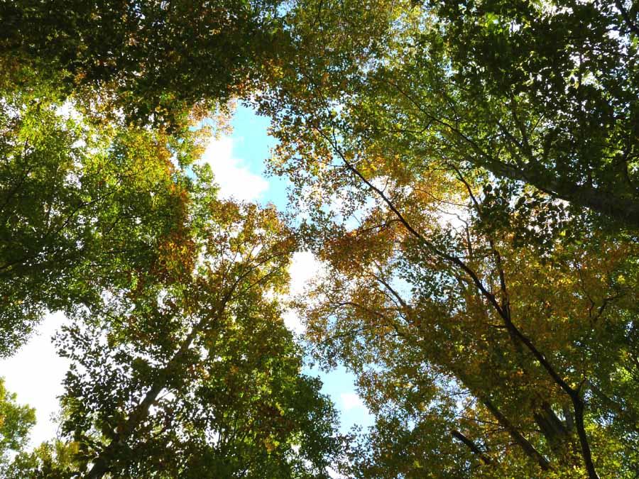 岳岱ぶな林の風景_f0150893_18562322.jpg