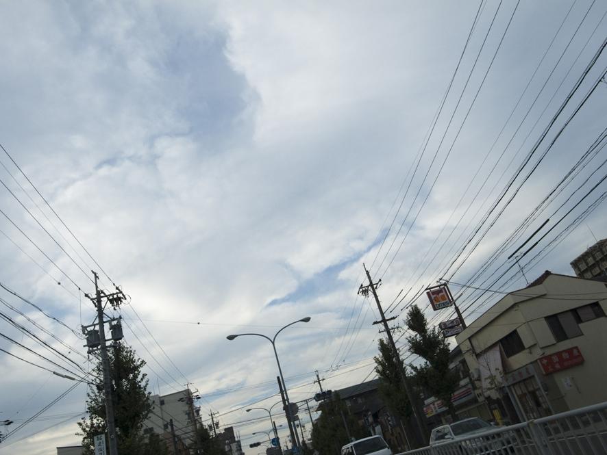 首長竜が!!!!_b0206197_1629552.jpg