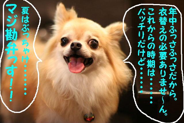 b0130018_9544318.jpg