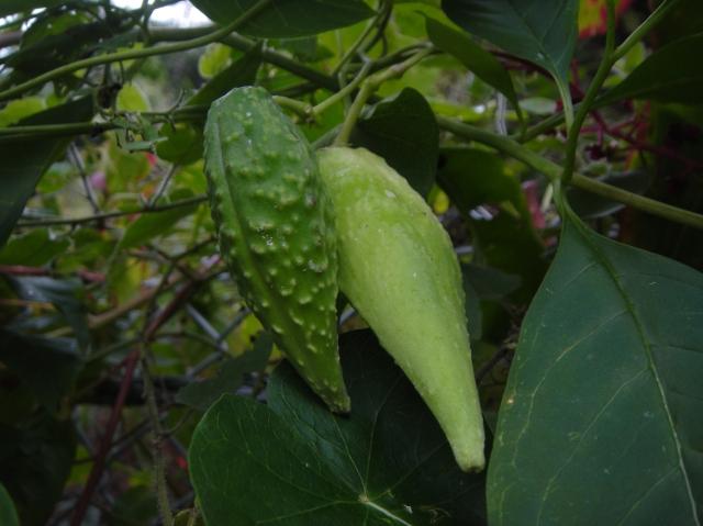 H22年10月度植物調査_c0108460_161843100.jpg