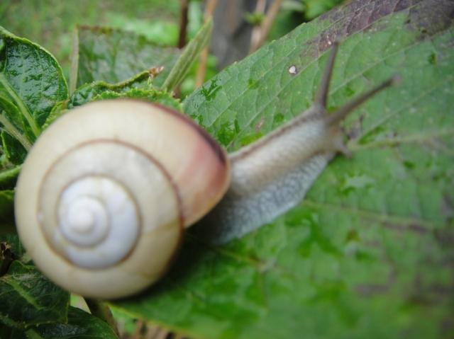 H22年10月度植物調査_c0108460_16193763.jpg