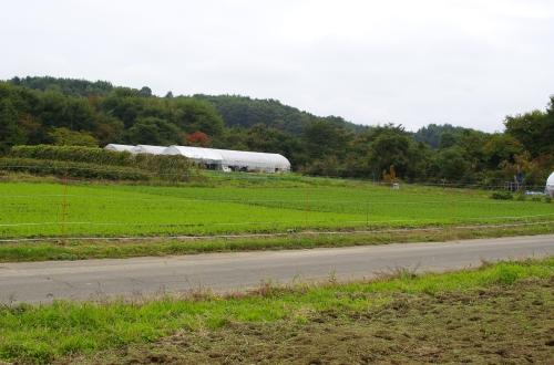 畑を散歩_c0110869_1742412.jpg