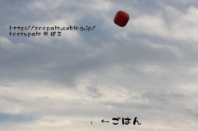 f0158697_231099.jpg