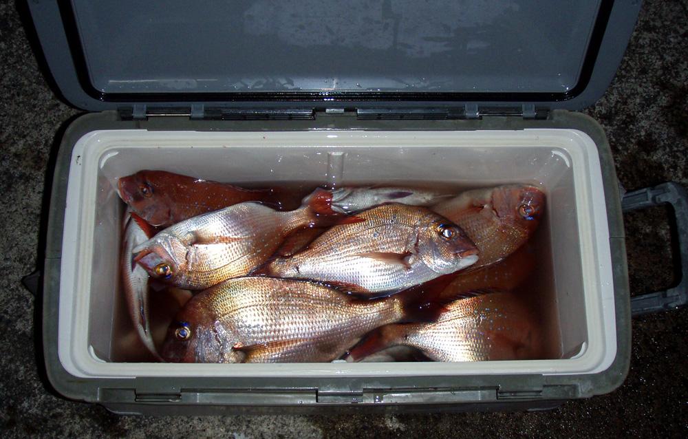 2010年10月21日(木) 知多半島 大井港より釣行_d0171823_2319732.jpg