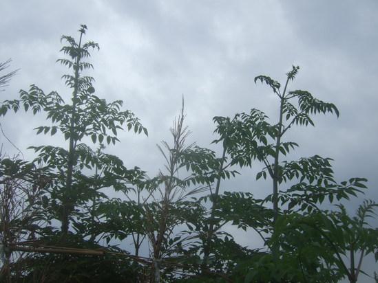 小雨の中....イチゴの定植!_b0137932_18361947.jpg