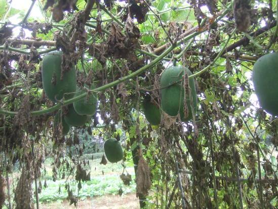 小雨の中....イチゴの定植!_b0137932_1836747.jpg