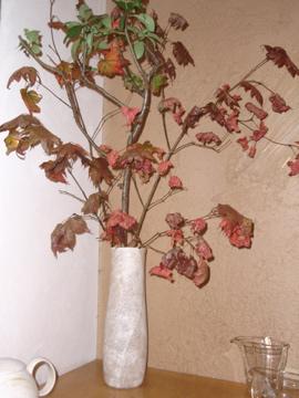 紅葉しています_b0132442_16484621.jpg