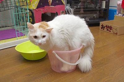 バケツ猫と圧縮猫_a0028451_1843184.jpg