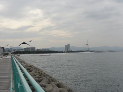 りんくう公園散策&会議出席   by  (TATE-misaki)_c0108460_20235579.jpg