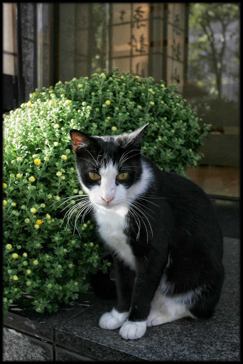 猫にゃん 2_f0021869_23103317.jpg