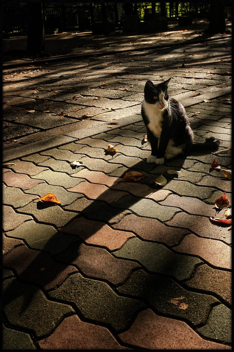 猫にゃん 2_f0021869_23105360.jpg