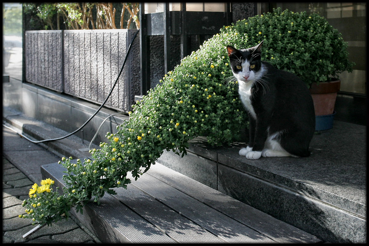 猫にゃん 2_f0021869_2382884.jpg