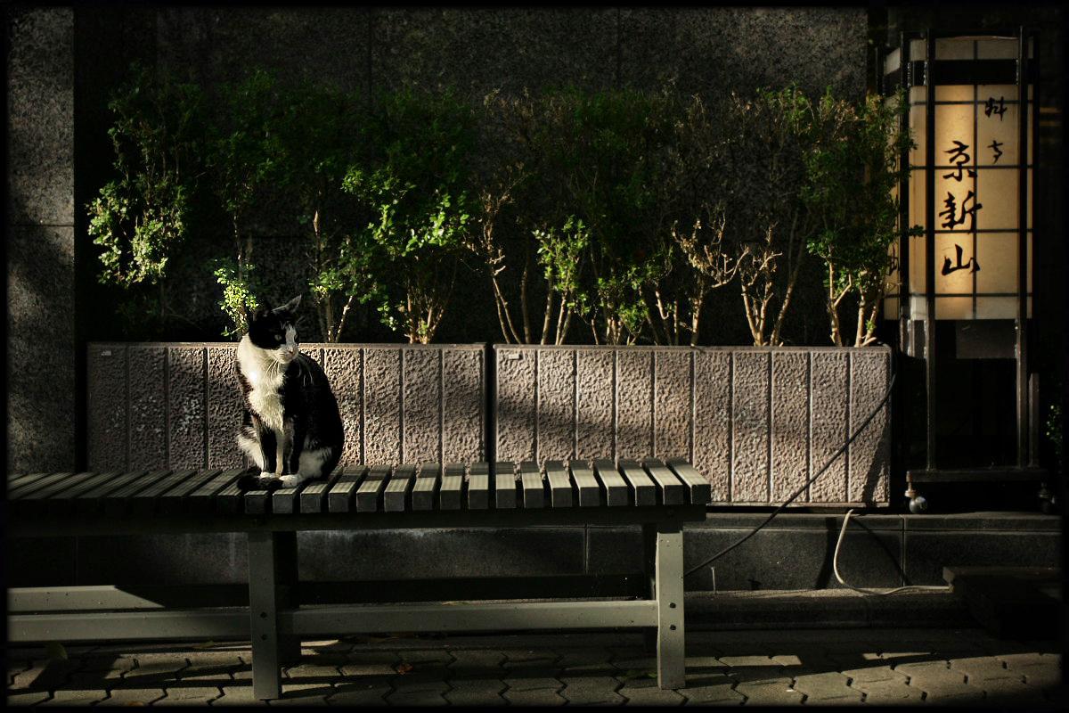 猫にゃん 2_f0021869_2391424.jpg