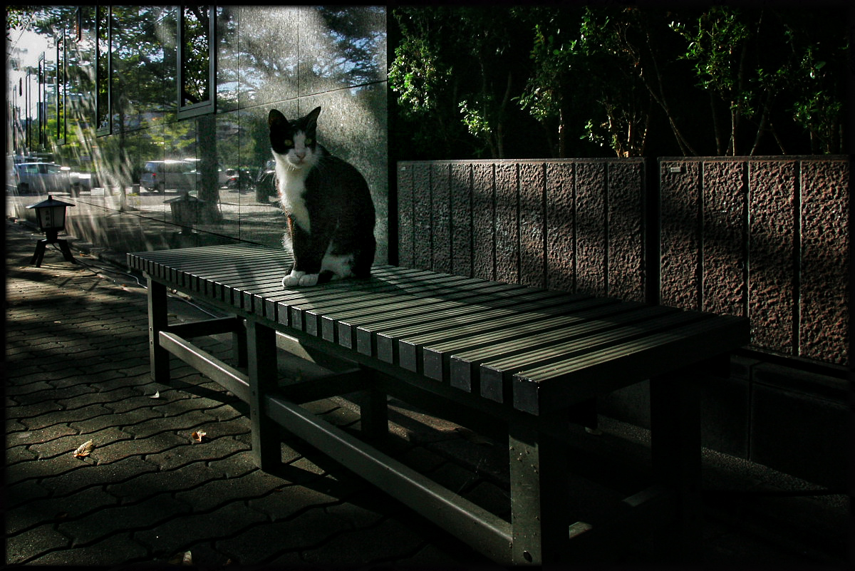 猫にゃん 2_f0021869_2394174.jpg