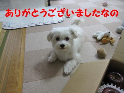 b0193480_15473167.jpg
