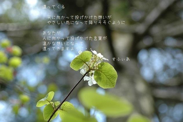 b0152416_16363613.jpg
