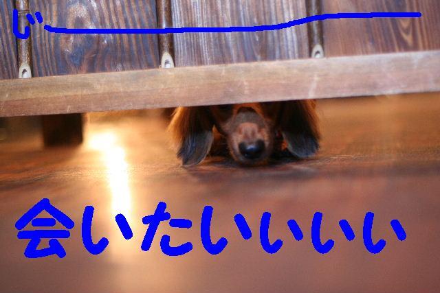 b0130018_18111494.jpg