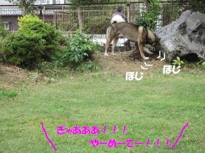 f0143123_201138.jpg