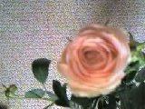 d0133863_21562011.jpg