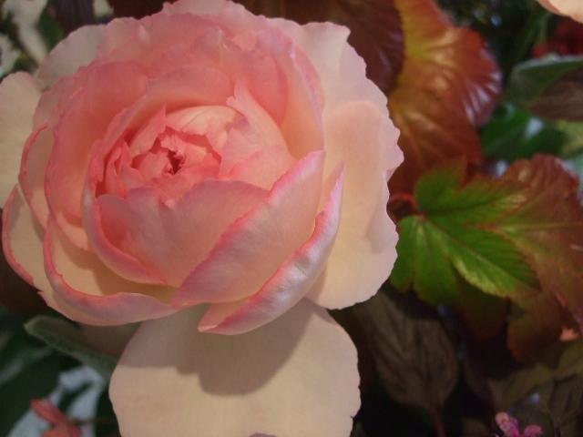 オークリーフ花の教室(島崎さんの作品)_f0049672_1853874.jpg