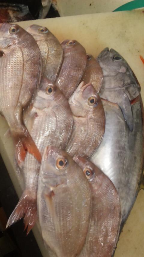 今日のお魚_e0183396_17242286.jpg