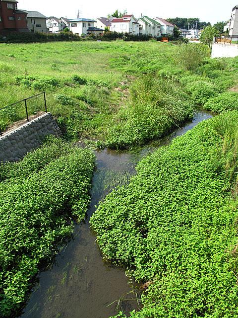 落合川を辿る(2)川を支える旧流路たち_c0163001_237378.jpg