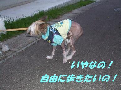f0179203_825488.jpg