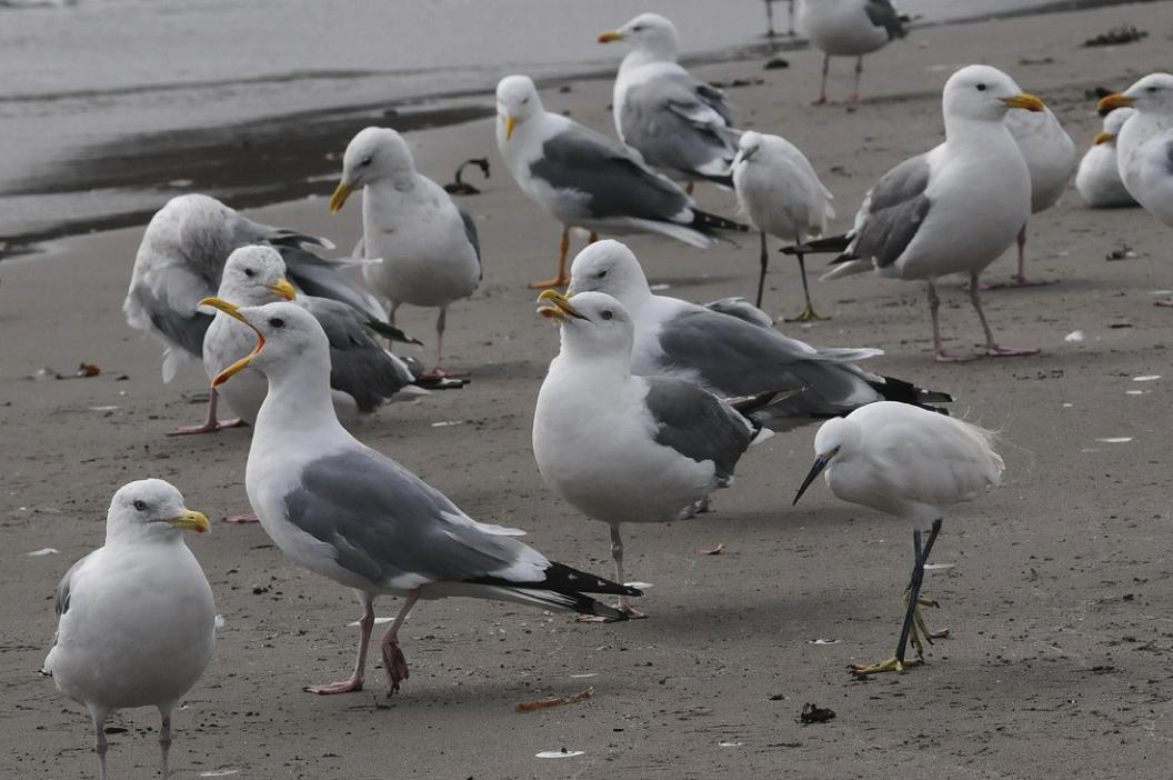 今 日 の 浜 辺 No.13_d0039021_1830358.jpg