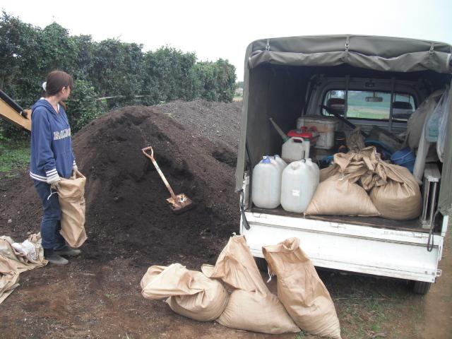 今日は堆肥の運び入れと草刈り・・葉物の収穫・・_c0222448_12444829.jpg