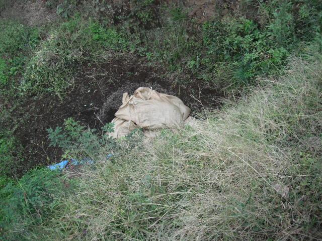 今日は堆肥の運び入れと草刈り・・葉物の収穫・・_c0222448_12453427.jpg