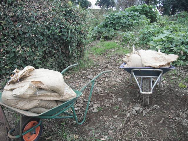 今日は堆肥の運び入れと草刈り・・葉物の収穫・・_c0222448_12454350.jpg