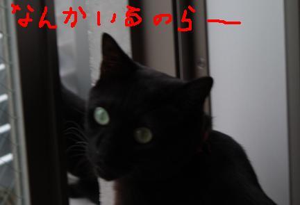 d0009175_1934417.jpg